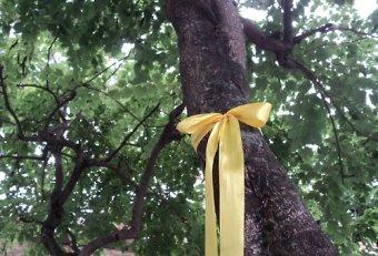 tie_yellow_ribbon_on_the_oak