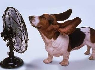 beagle with fan