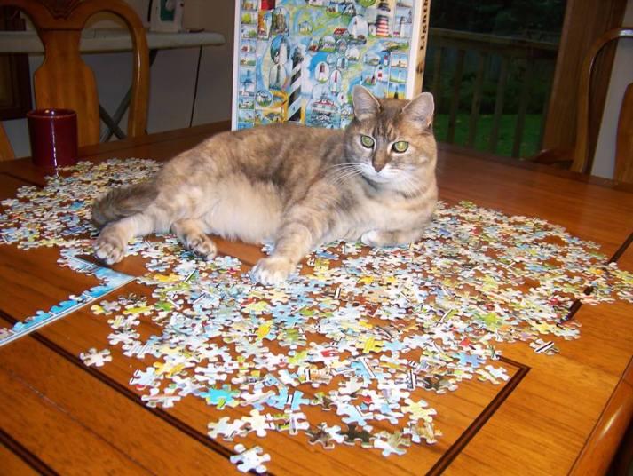 Peop the puzzler.jpg
