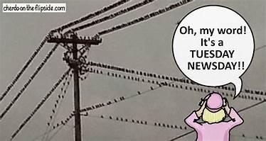 tuesday newsday cartoon